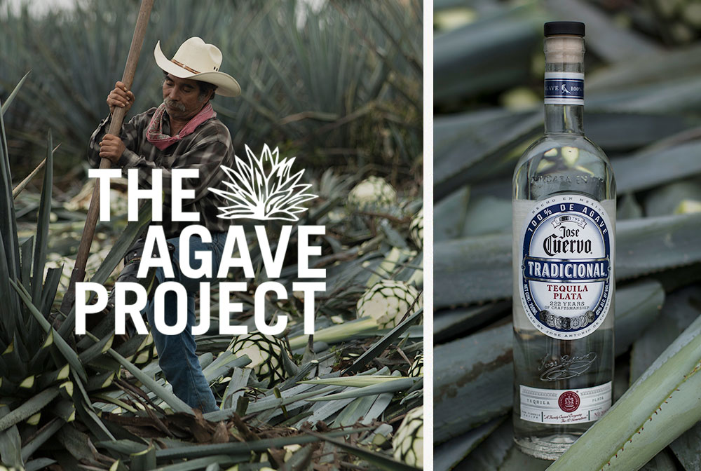 Image result for jose cuervo agave project""